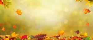 mdr-educator-hot-topics-fall